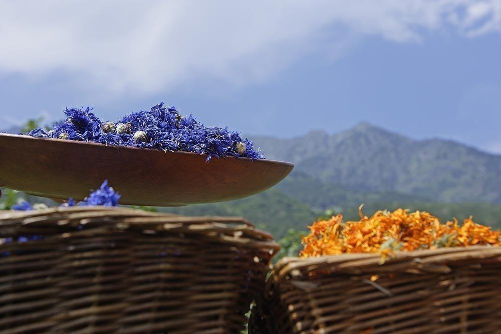 Alpine Heilkräuter und Gewürze